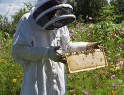 bee farm 3